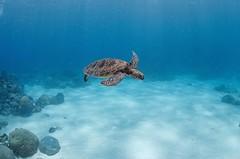 Finally a turtle!