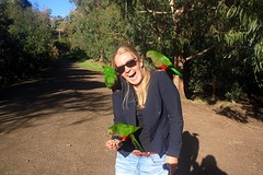 They were everywhere - parrots!