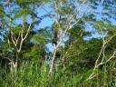 Orang Oetan in het wild