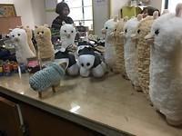 Sheepie met ezeltjes en lama's!