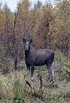 I saw a moose! 😁