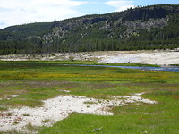 Bloemenweide in Yellowstone NP