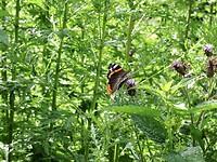 Vlinder (een van de vele)