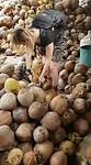 Het niet pellen van een kokosnoot