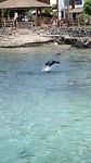 Zeeleeuwen in de haven van San Cristobal Galapagos