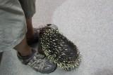 Louis voeten inspecteren