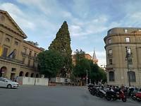 Mammoetboom Pamplona