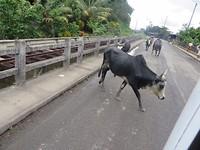 road koe