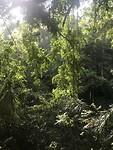 Het uitzicht op de jungle