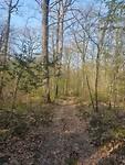 Lange paden dans les bois