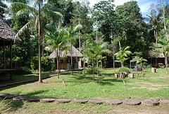 eco lodge jungle
