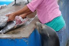 vismarkt Santa Cruz