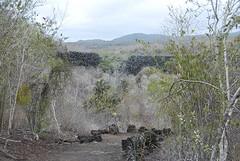 Muro las Lagrimas