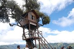 Casa del Arbo