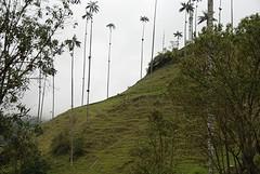 Valle de Cocoro