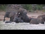 Mating Elephants in Saadani National Park