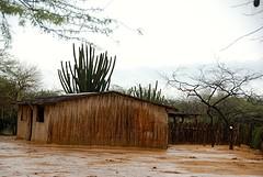 Wayuu gemeenschap