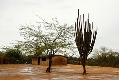 Wayuu veld