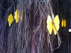 butterfly's uit '100 jaar eenzaamheid'