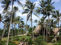 Heerlijk die palmen