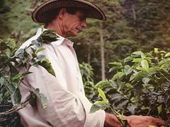 Coffee cultuur
