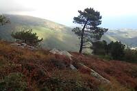 Heide en uitzicht op de berg