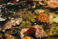 Seattle - Seattle Aquarium