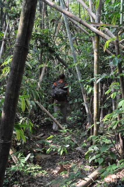 8 Een Weg Door De Dichte Jungle Banen Foto Manon En
