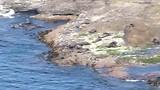 Cape Bridgewater Seal Colony
