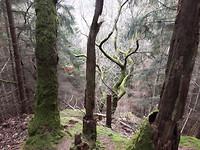 20170227 Grillige bomen