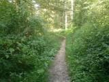 Door het bos in de omgeving van Zofingen, Zwitserland