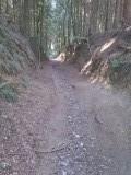 Door het bos in de omgeving van Zofingen, Zwitserland (2)