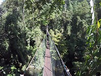 Canopy walk door de boomtoppen