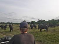Overal olifanten