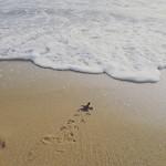 Run turtle Run!