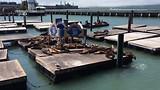 Zeeleeuwen op pier 39, San Francisco