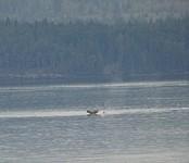 Weer een walvis