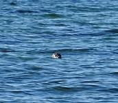 Een zeehondjes