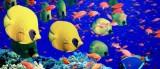 GBR vissen