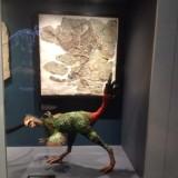 Aus Museum