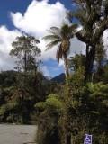Rain Forest Retreat 2