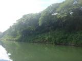 rivier met paard