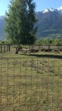 De geitjes