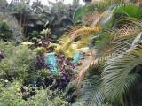 Pan Pacific  zwembad