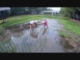 Planting our own rice in Langkawi