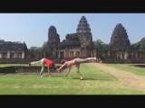 Doing gymnastic with Janine
