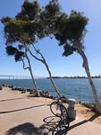 beautiful harbor at San Diego