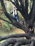 boom klimmen in kraków