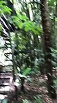 Het jungle gevoel