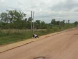 4) Cassave drogen op de weg kan makkelijk